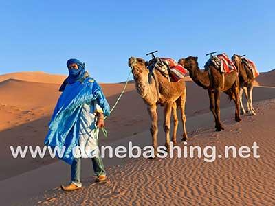 camel ride in morning desert tour