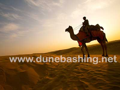 best camel safari