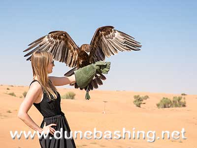 falcon in dubai desert