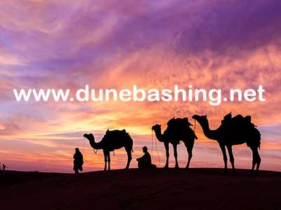 camel-ride-in-dubai-desert